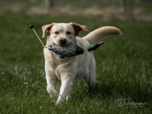 Tico - Atticus for Loch Mor